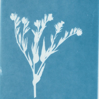 Image 2: Printed and developed cyanotype (CPC 17)