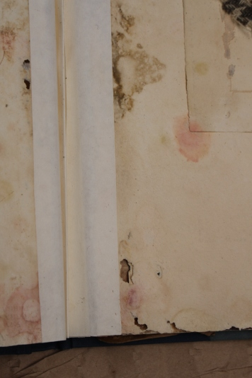 Folio of watercolours, detail of mould and silverfish damage - before